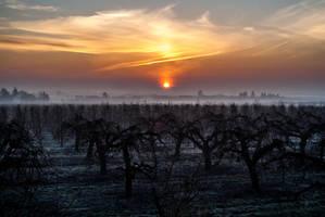 Sunrise by Exrey