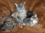 cat family by kaitengiri