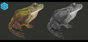 Frog Final Rendering by cyrielkiller