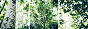 F2U Decor Green Beauty #2 by Mairu-Doggy