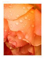This Rain by eirescu