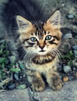 Kitty by EmreKaanSezer