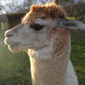 wotnip's Profile Picture