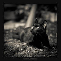 Momo The Black Cat by IzabelaMilczarek