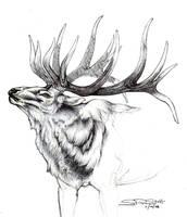 Wapiti Sketch... by paleWOLF