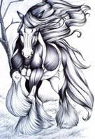 Irish Horse... by paleWOLF