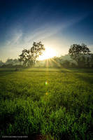 Rice Field by gifgof
