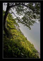 Falling tree by AnteAlien