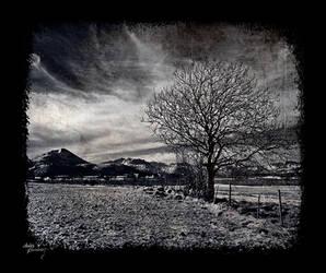 Tree by AnteAlien