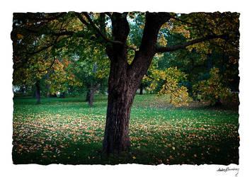 Autumn tree by AnteAlien