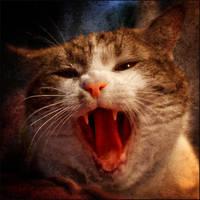 Evil cat by AnteAlien