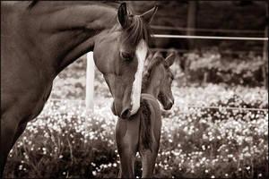 Love by AnteAlien