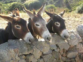 Donkeys by Andrutza97