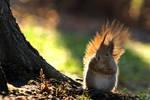spring' squirrel by pepapigo
