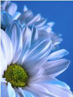 blue by Emielcia