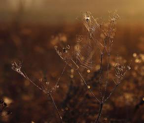 sunrise by Emielcia