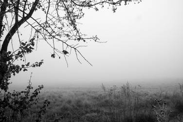 Fog by alechanted