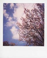 Cherry Blossom Sky by brobe