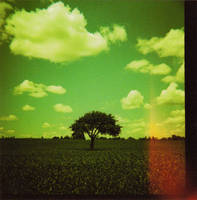 Lonely Tree by brobe