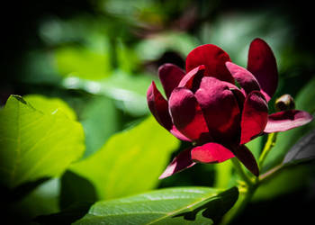 Red Petals-Green Bokeh by pinestater234