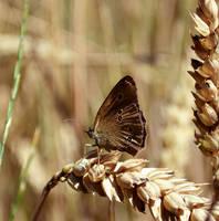 Butterfly by MateuszPisarski