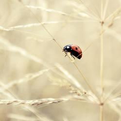 Walking in the grass.. by MateuszPisarski