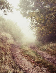 Misty Path. by MateuszPisarski