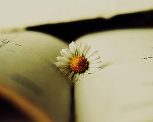 Reading by MateuszPisarski