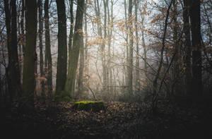 Mystery Woodland by MateuszPisarski