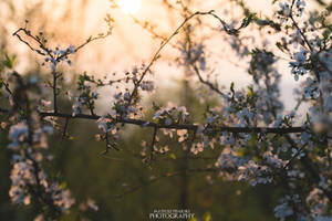 spring love by MateuszPisarski