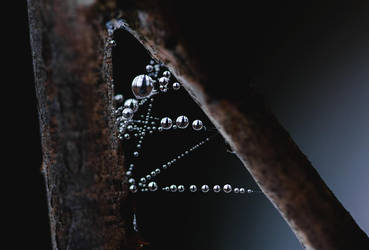 Morning pearls by MateuszPisarski