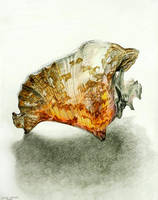 Glowing Conch by dreamie
