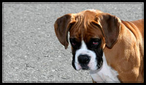Dog 007 by dogukan