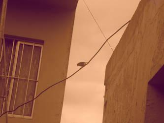 bird by Carolinds