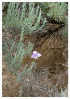 'Desert Bloom' by GoaliGrlTilDeath