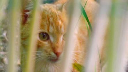 Kitty by Lajna11