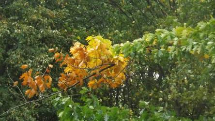 Autumn colors by Lajna11