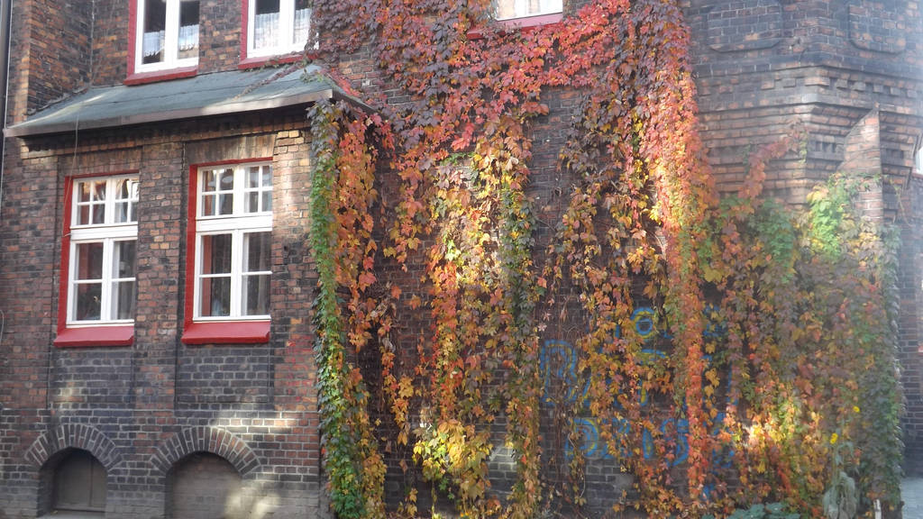 Autumn colors  in Nikiszowiec by Lajna11