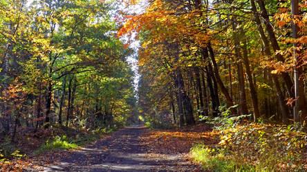 Autumn walk by Lajna11