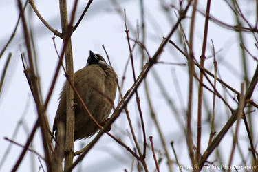 Birdie by Ignas357