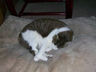 Sleeping Kitty by CrystalMizuka