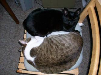 Yin-Yang Kitties by CrystalMizuka