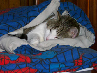 Spider-Cat by CrystalMizuka