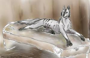 Old wolf by Scheq