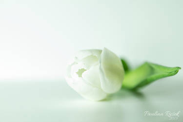 White beauty by Lamia86