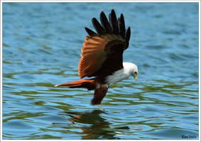 Malaysian eagle by KlaraDrielle
