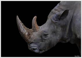 Rhino by KlaraDrielle