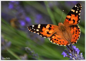 Passion butterflies by KlaraDrielle
