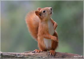 Squirrel by KlaraDrielle