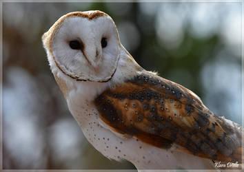 Barn owl by KlaraDrielle